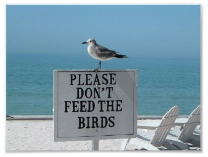 Please Don't Feed the Birds Print